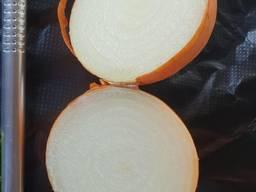 Лук репчатый на экспорт/ Onion for Export