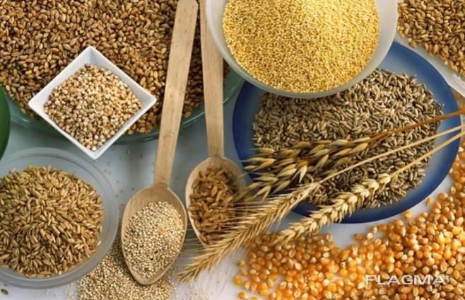 Продам зерно в Чехии